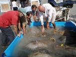 Bou Ferrer shipwreck in Vila Joiosa named Item of Cultural Interest