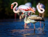 29th January, Las Aves del Parque Natural, ornithological tour of Natural Park, Torrevieja