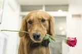 Tired of it being just you and the dog again this Valentines?