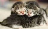 Torrevieja Town Hall launches campaign to save stray kittens