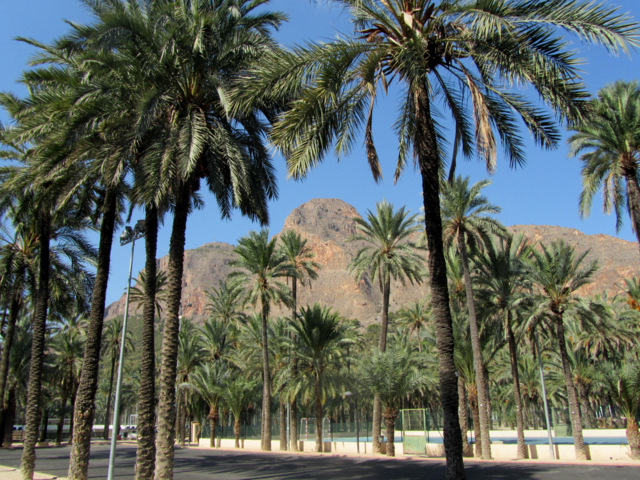 The Palmeral of Orihuela