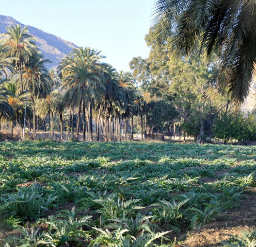 A Moorish morning out in Orihuela