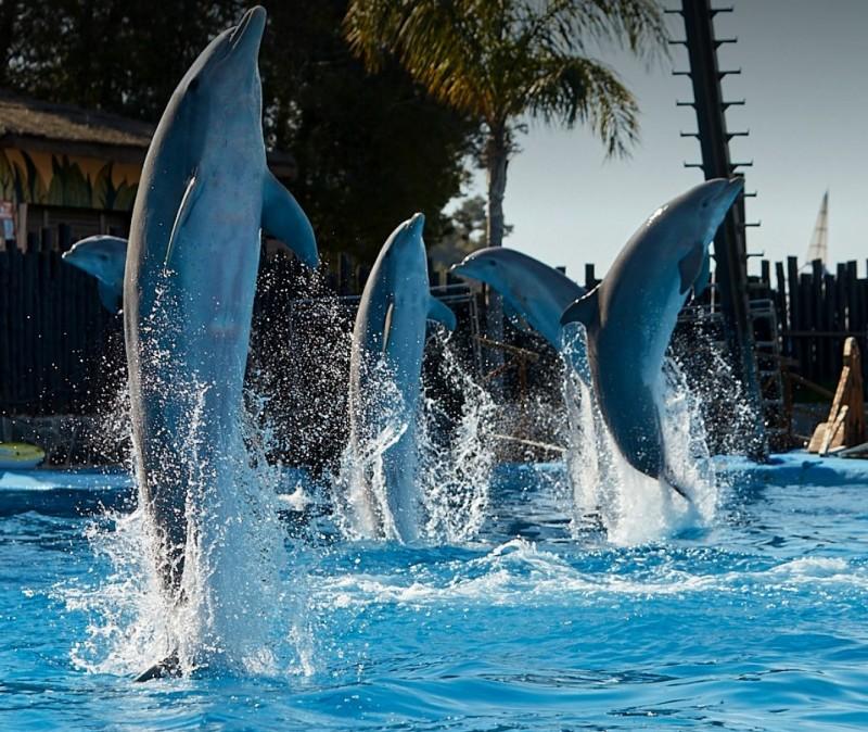 Mundomar animal park in Benidorm will reopen on June 12