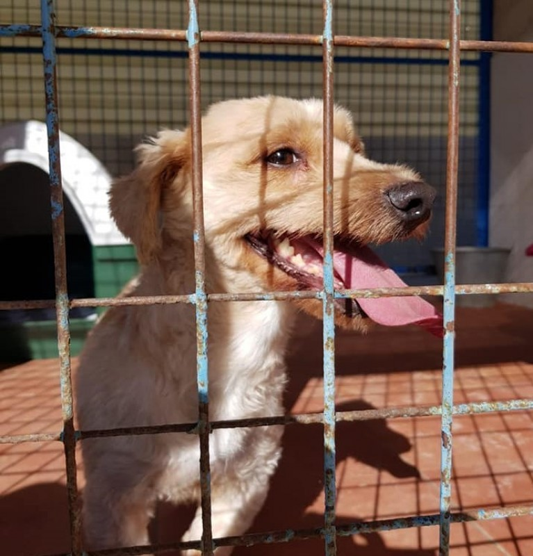 Torrevieja to invest 700,000 euros in new animal rescue shelter