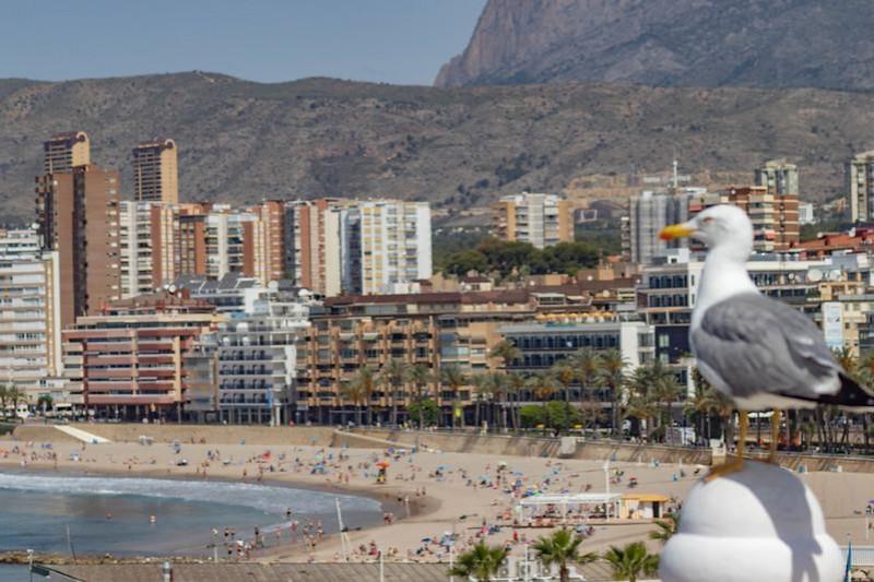 Three million euros aid for Benidorm tourist accommodation sector