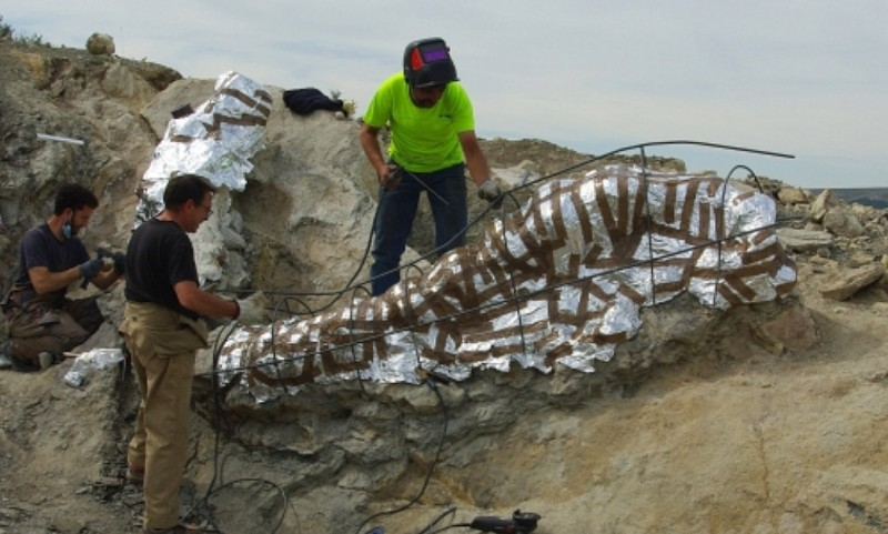 <span style='color:#780948'>ARCHIVED</span> - 145-million-year-old dinosaur neckbone fossil discovered in Teruel