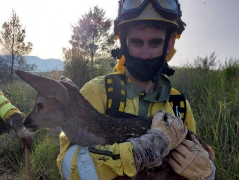 <span style='color:#780948'>ARCHIVED</span> - New-born fawn rescued from forest fire in Moratalla