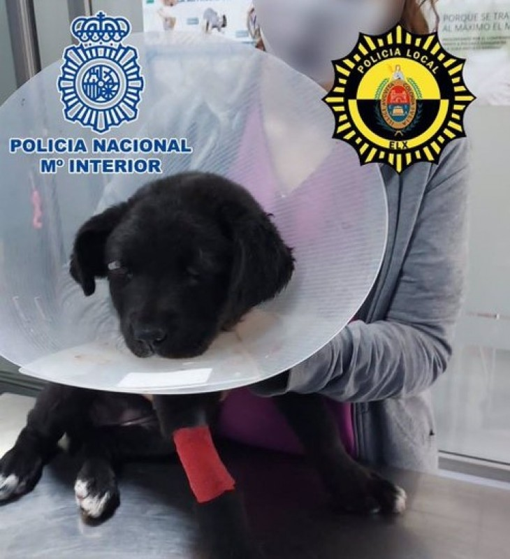 <span style='color:#780948'>ARCHIVED</span> - Badly beaten puppy blinded as owner is arrested in Elche