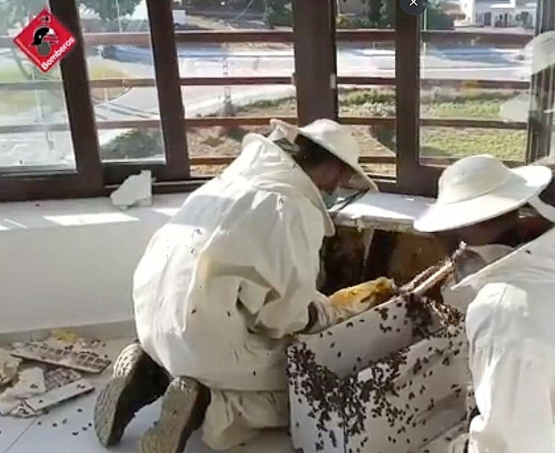 <span style='color:#780948'>ARCHIVED</span> - No sting in the tail for firemen as they remove beehive from Calpe balcony