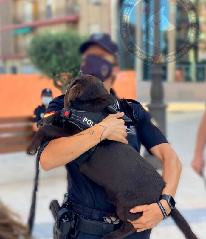 <span style='color:#780948'>ARCHIVED</span> - Mazarron police preparing canine unit for duty