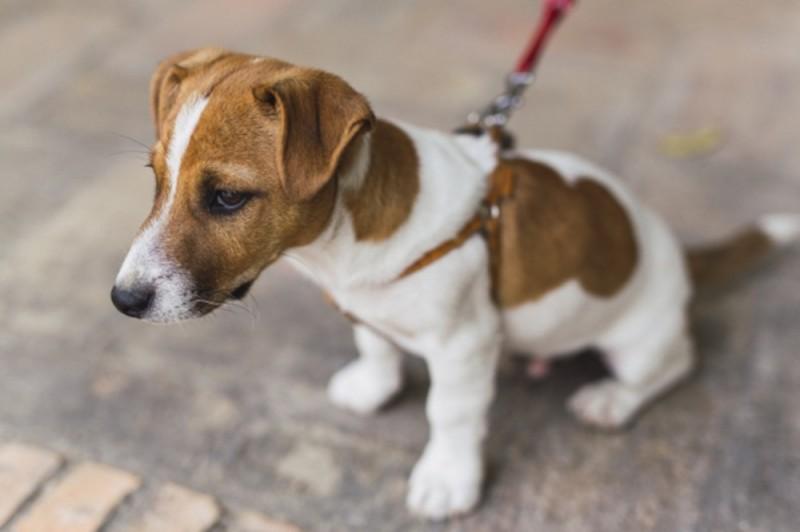 Volunteer dog walkers sought by Benissa, Alicante animal sanctuary