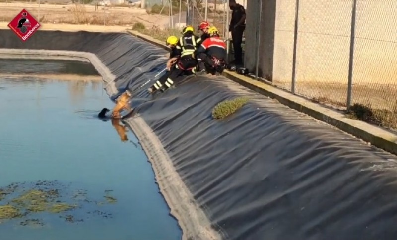 <span style='color:#780948'>ARCHIVED</span> - Heroic firefighters save drowning dogs in Elche