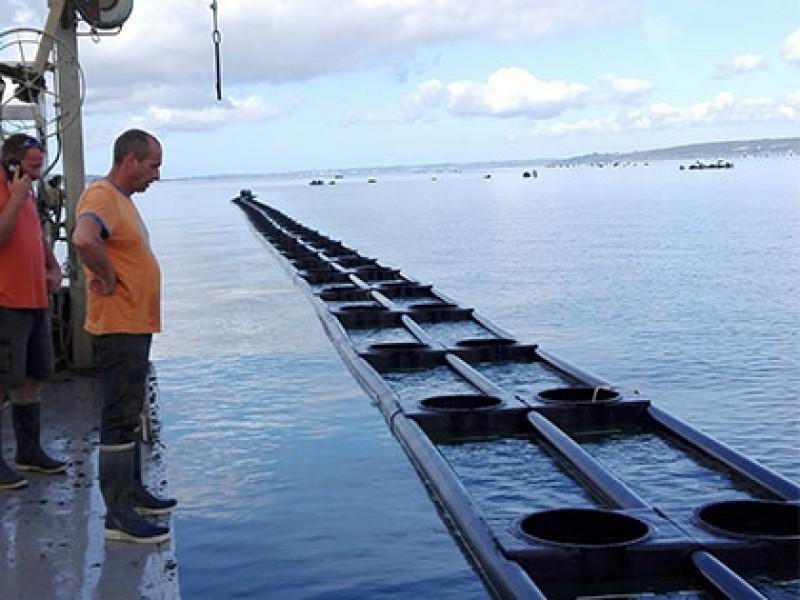Plans for large oyster farm off coast of Santa Pola given the go-ahead